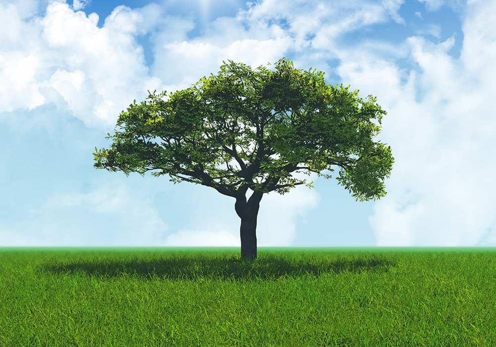 tree field environmental awareness aims excellence responsibility respect